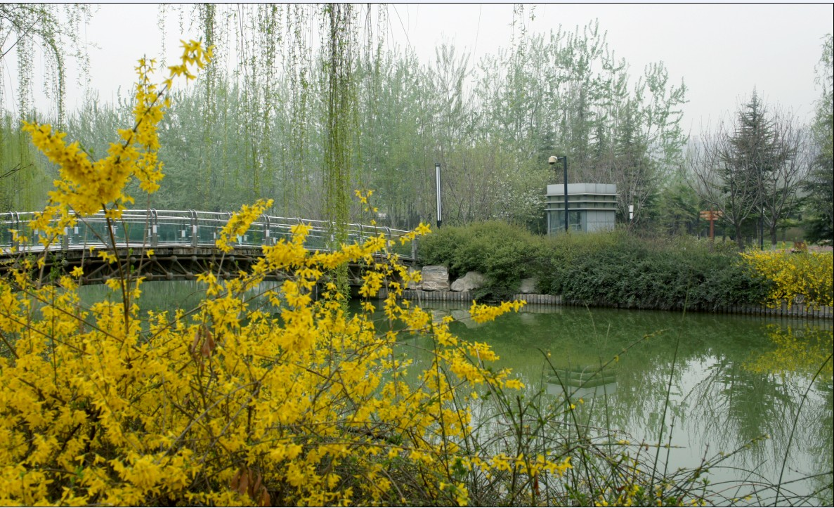 原来是公园里鸟语花香,空气清新,卫生干净,引来了老年人们,在这里用